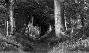 Sendero bosque_wide_BYN