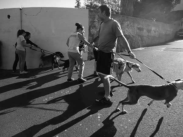 Perros en la salida para pasear el domingo 5 de enero de 2014.