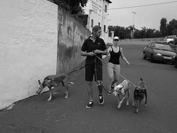 Dos voluntarios llegan de regreso al refugio con tres perros.