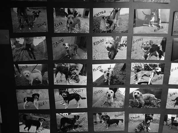 Fotografías de perros que pueden ser adoptados o apadrinados.
