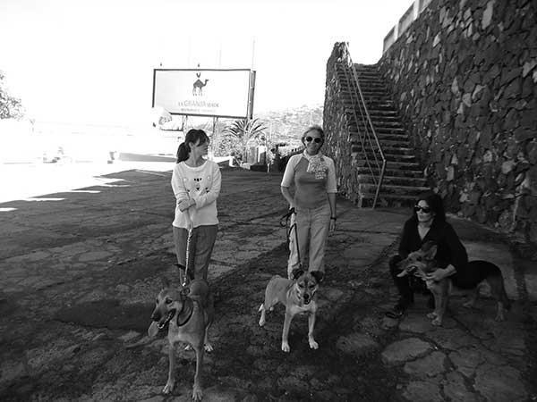 Voluntarias de paseo con los perros. En el centro, la secretaria del refugio.