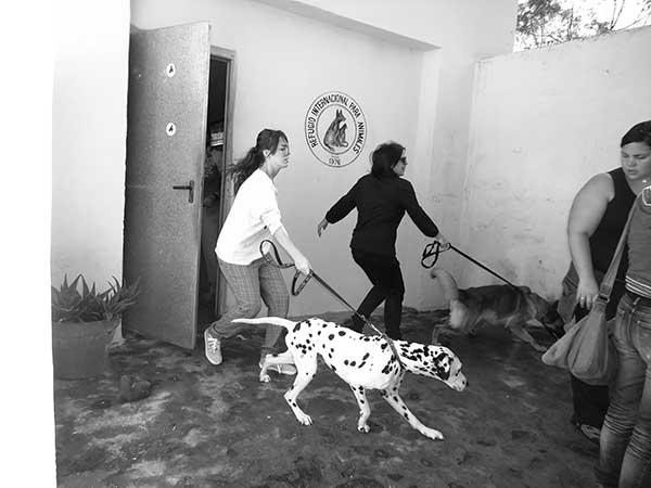 Madre e hija acuden en otro paseo con los perros grandes: un dálmata (que ya ha sido adoptado) y un pastor alemán.