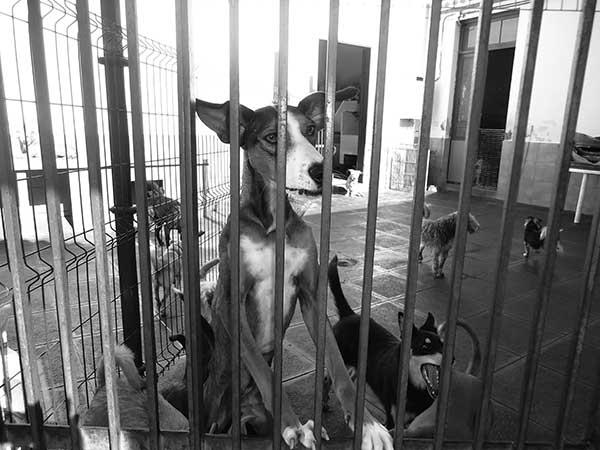 Algunos canes en una de las puertas de la entrada al centro.