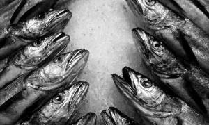 Coro pescado, de Ana Vigueras.