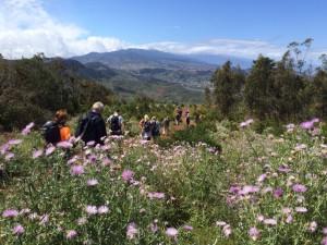 Ruta de Tenerife Walking Féstival
