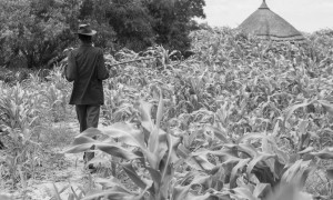 LILIIR, SOUTH SUDAN-JUNE 25: An unidentified man surveys the crop of millet in the village of Liliir, South Sudan on June 25th 2012.