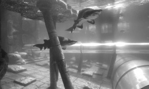 Poema-del-Mar-recibe-los-tiburones-del-Siam-Park-1