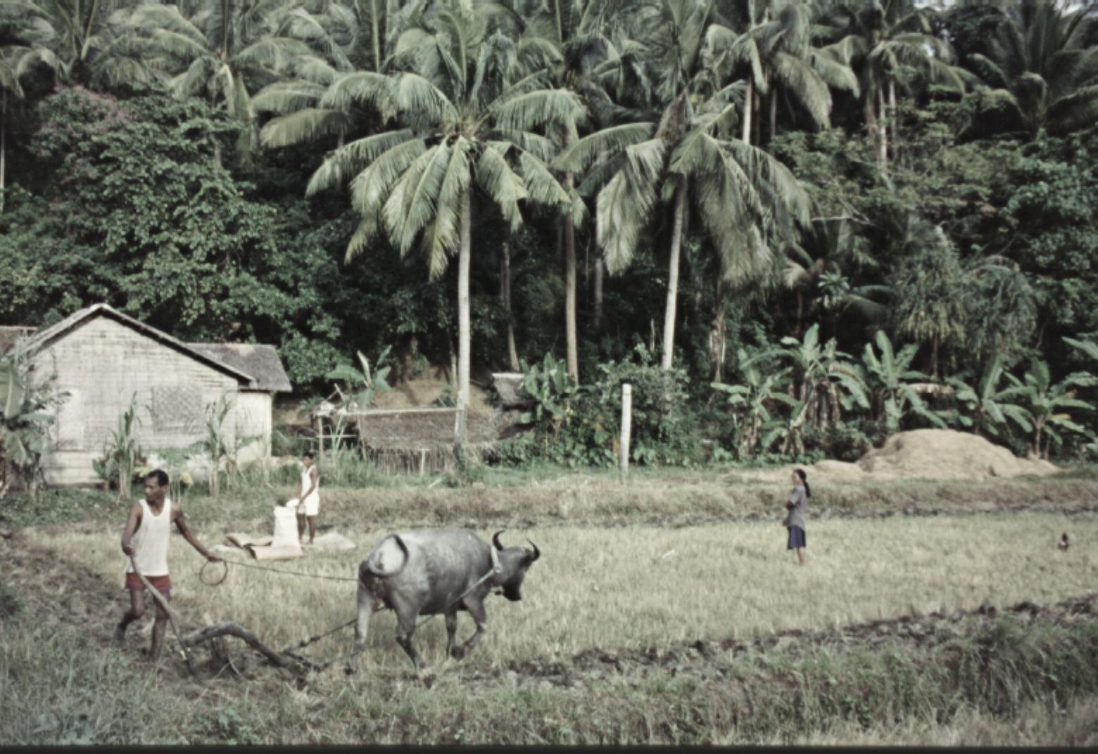 Campesinos y campos de cultivos en las islas filipinas