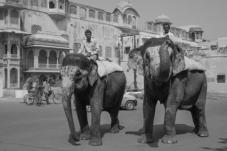 dos elefantes en jaipur