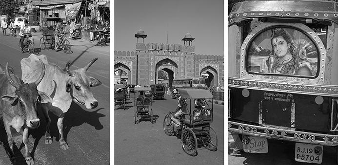 Collage del tráfico y vacas en Jaipur