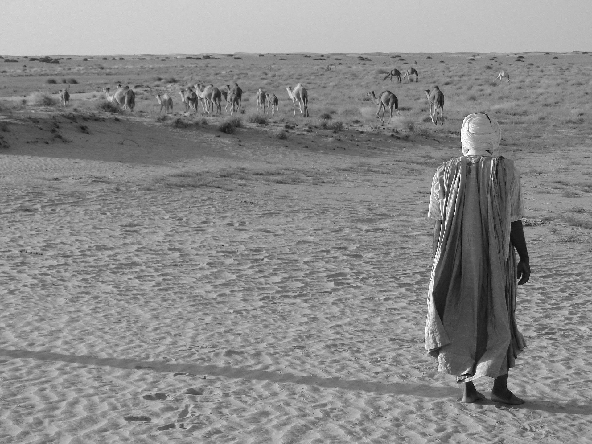 Pastoreo en Mauritania