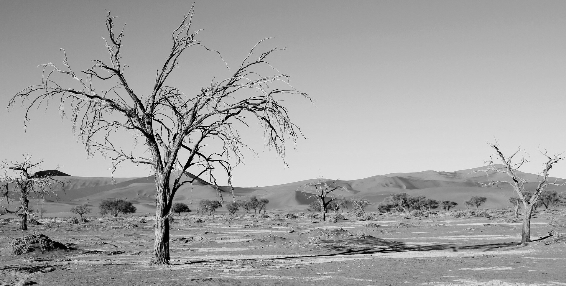 Namibia, agobiada por la sequía