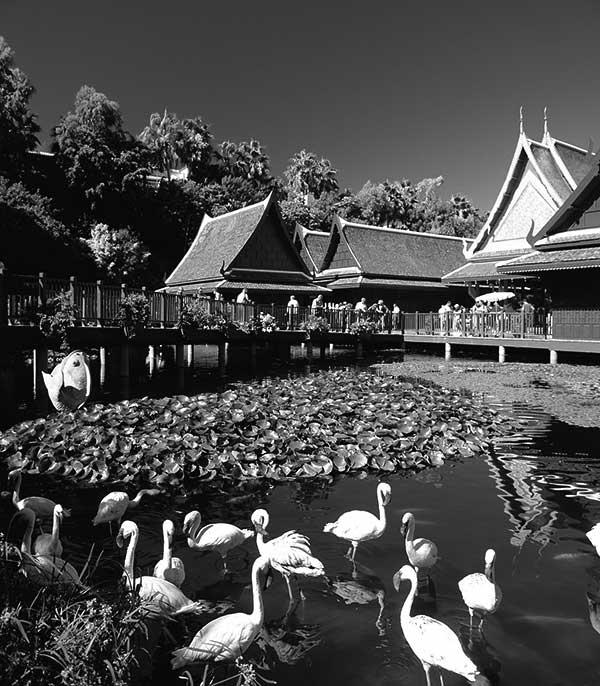 Loro Parque, Pueblo Thai y Lago.