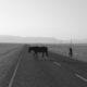 Caballos en Lüderitz