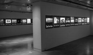"""La Fundación CajaCanarias inaugura la exposición """"Fotógrafos de la Naturaleza 2020"""""""